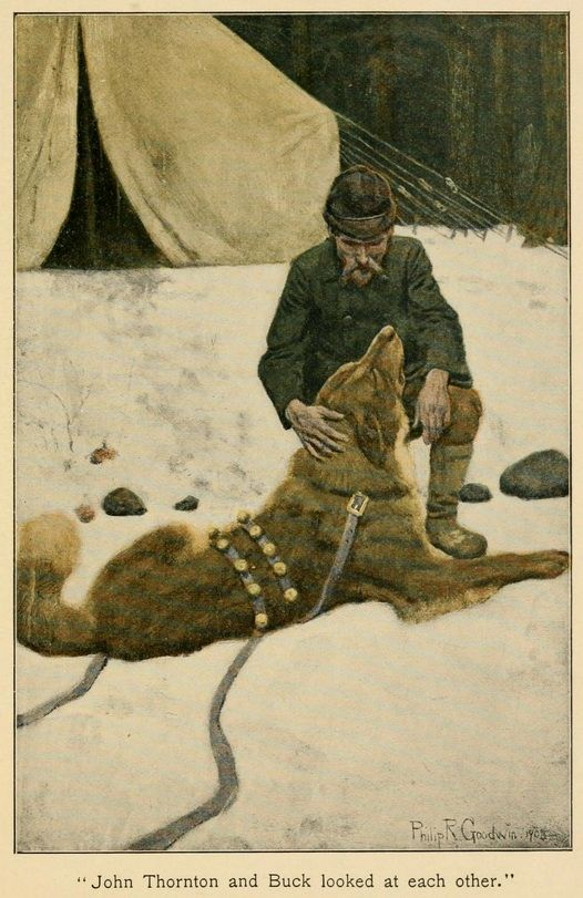 A picture for the book The Call of the Wild