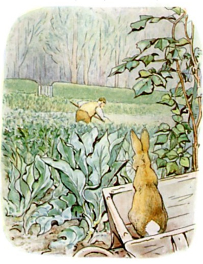 An illustration for the story The Tale of Peter Rabbit by the author Beatrix Potter